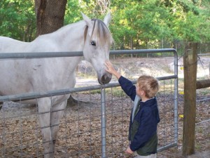 anglo-arab-rescue-horse-florida-story-willow-6