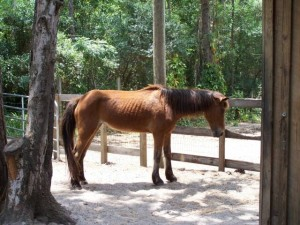 mare-rescue-horse-florida-story-frolic-1
