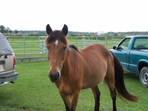 mare-rescue-horse-florida-story-frolic-6