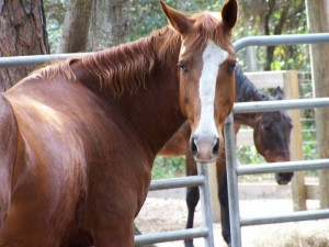 mare-rescue-horse-florida-story-penelope-3